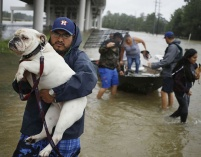 Aug. 28, 2017 – Spring, TX – A man carries a dog after being rescued from rising floodwaters at the Highland Glen housing development. (Luke Sharrett/ Getty Images)