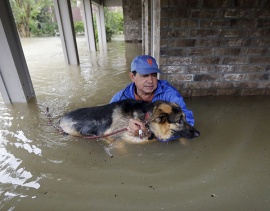 Aug. 28, 2017 – Spring, TX – Joe Garcia carries his dog Heidi from his flooded home as he is rescued from rising floodwaters. (David J. Phillip/AP)