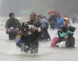Aug. 28, 2017 – Houston, TX – Isiah Courtney carries his dog Bruce through floodwaters from in Beaumont Place. (Jonathan Bachman/Reuters)