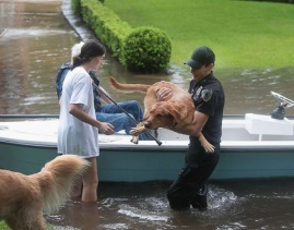 Aug. 27, 2017 – Houston, TX – Volunteers and officers from the neighborhood security patrol help to rescue residents and their dogs. (Scott Olson/Getty Images)