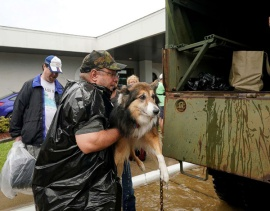 Aug. 27, 2017 – Dickinson, TX – Volunteers load pets into a collector's vintage military truck to evacuate them. (Rick Wilking/Reuters)