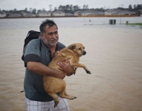 Aug. 28, 2017 – Spring, TX – A man carries a dog after being rescued from rising floodwaters. (Luke Sharrett/ Getty Images)